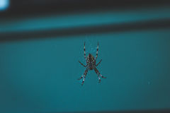 Паук ткача шара в темной домашней установке Стоковое Фото