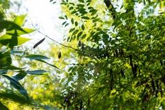 Паук хищника сплел сеть паука в ожидании жертву Стоковая Фотография
