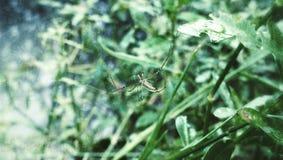 Паук-человек Стоковые Фото