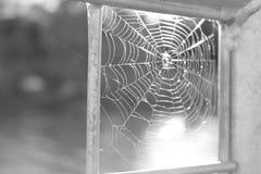 Паук-человек Стоковое фото RF