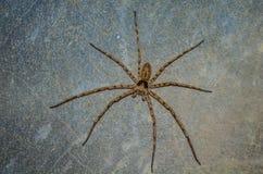 паук Стоковая Фотография RF