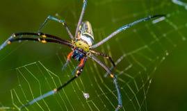 Паутина волокна паука и паука сети стоковое фото rf
