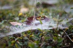 Паутина в лужайке Стоковые Фото