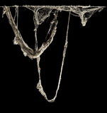 Паутина или сеть паука в старом тайском доме изолированном на черной предпосылке Стоковое Изображение RF