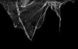 Паутина или сеть паука изолированные на черной предпосылке Стоковое Изображение