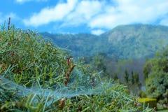 Паутина на дереве Стоковое фото RF