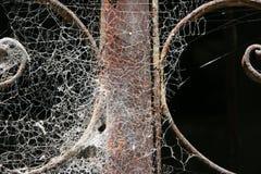 паутина Стоковые Фотографии RF