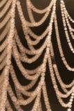 Паутина Стоковое Изображение RF