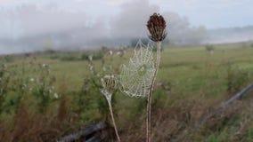 Паутины дрожат в ветре Луг лета в предыдущем пасмурном утре акции видеоматериалы