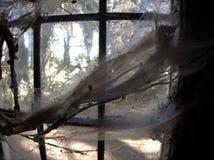 Паутины на старом окне Стоковое Фото