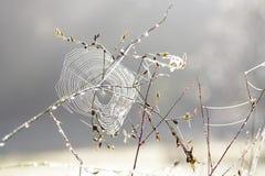 Паутины на траве Стоковые Изображения