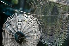паутины Стоковое Изображение RF