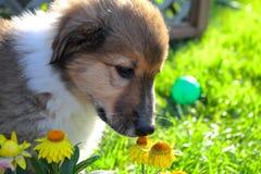 пахнуть роз Стоковая Фотография RF