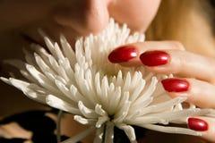 пахнуть цветка Стоковые Изображения RF