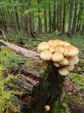 Пачка грибов растя на журнале стоковое изображение rf