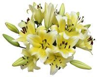 Пачка лилии стоковая фотография rf