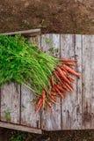 Пачка пакостной моркови на деревянной предпосылке планок Стоковые Фотографии RF