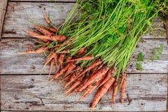 Пачка пакостной моркови на деревянной предпосылке планок Стоковая Фотография RF