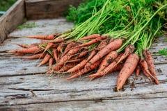 Пачка пакостной моркови на деревянной предпосылке планок Стоковое Изображение