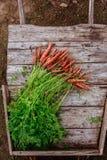 Пачка пакостной моркови на деревянной предпосылке планок Стоковая Фотография