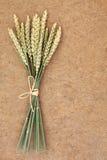 Пачка пшеницы Стоковое Изображение RF