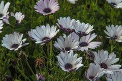 Пачка цветков Стоковое Фото