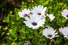 Пачка цветков Стоковое Изображение
