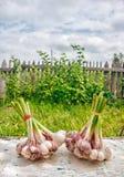 2 пачки чеснока лежа на таблице Стоковые Фото