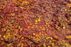 Паэлья от конца-вверх цыпленка национальное испанское блюдо паэлья в большом skillet сварено на открытом огне, на коле стоковое изображение rf