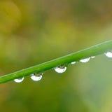 падает вода зеленого цвета травы Стоковое Фото