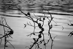 падает вода дождя Стоковые Фотографии RF