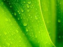 падает свежая зеленая вода листьев Стоковые Изображения