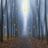 Падать листвы осени Стоковые Изображения RF