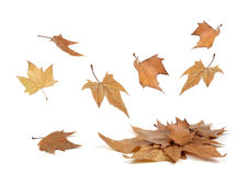 Падать листьев осени Стоковые Изображения