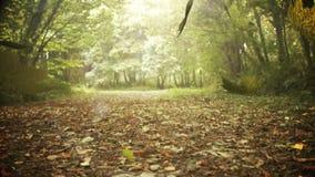 Падать листьев осени сток-видео