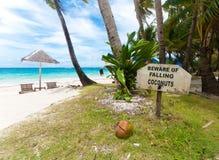 падать кокосов Стоковые Фото