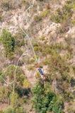 Падать шлямбура Bungee свободный на мост Bloukrans Стоковое Изображение RF