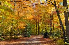 Падают красочные деревья стоковые фото