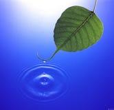 падая вода листьев Стоковое фото RF