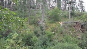 Падая дерево в лесе видеоматериал