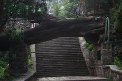 Падая дерево над лестницей в парке Taishan стоковая фотография