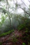 Падая дерево на тропе Стоковые Изображения