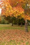Падая листья дерева осени Стоковая Фотография RF