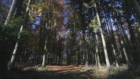 Падая листья видеоматериал