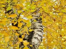 падая листья Стоковые Фотографии RF