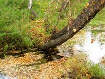 падая листья Стоковые Изображения RF