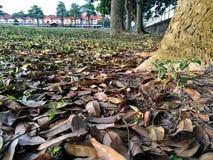 падая листья Стоковое Изображение RF