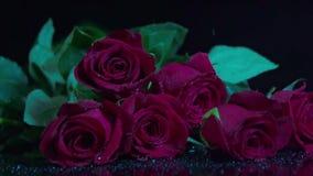Падая красная роза в замедленном движении акции видеоматериалы