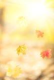 Падая кленовые листы осени стоковые изображения rf