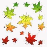 падая клен листьев Иллюстрация вектора с градиентом Стоковые Фотографии RF
